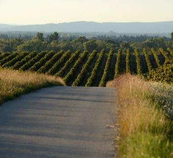 vignes-vacqueyras-fontnobles